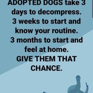 Adopted dogs saying