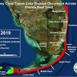 Stony coral tissue loss disease map